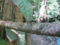 Eine 24-Stunden-Ameise, Vorsicht!