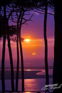 couché de soleil au pilat entre les pins