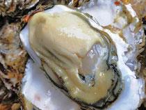 厚岸産牡蠣(カキ)「マルエモン」