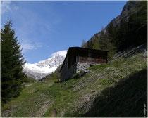 Alpe Bietschi