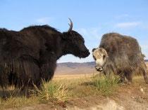 Монгольский як