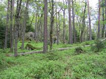 Lövnaturskog