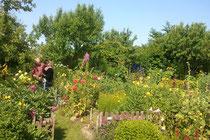 Vielfältige Blütenpracht in einem naturnahen Garten ohne Düngemittel