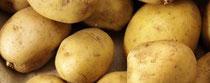 Rezept Kartoffel-Trüffel-Süppchen
