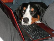 Ich beim Blog schreiben!!!