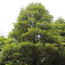 成長速度が遅い樹木