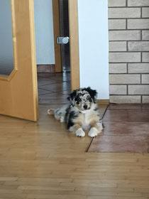 Freya 9 Wochen