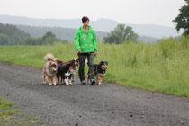 Immer sehr spannend... Hunde Begegnungen....