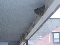巣が二個も・・・。