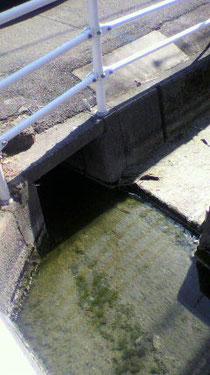 右方向に分岐する水路に段差があるためゴミ等がつまってしまう水路