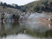 蓮華寺池での一斉放水