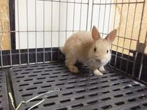 2014.07.31 ミニウサギ