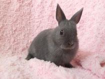 2013.7.11 ミニウサギ