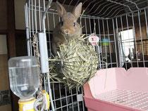2013.6.30 ミニウサギ