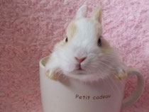 2014.04.29 ミニウサギ