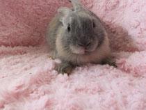2014.08.07 ミニウサギ