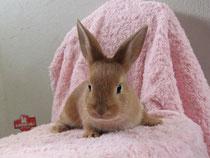 ミニウサギ 2013.3.18