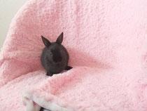 2013.10.31 ミニウサギ