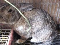 ミニウサギ ピータ