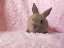 2014.1.18 ミニウサギ