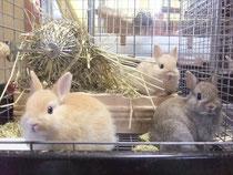 ミニウサギ 2013.8.10