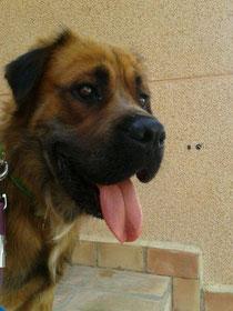Jolán, ahora Bonzo, adoptado!