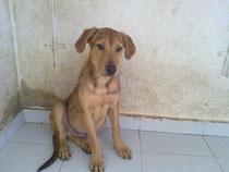 Mambo cuando estaba en la perrera.