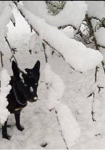 ALFA disfrutando en la nieve.