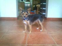 La alegre Pimienta adoptada!!