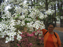 BTK mit Dogwoods in Hilton Head
