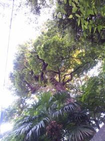 自然教育園