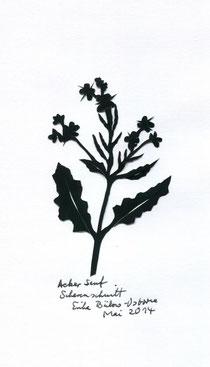 Ackersenf