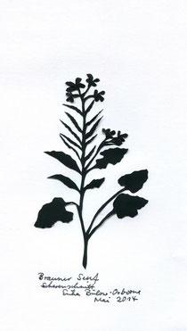 Brauner Senf