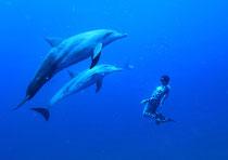 「イルカ寄り添うフィン」        2010年8月16日 読売新聞に掲載されました。