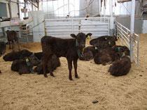 加藤牧場さんの牛♪