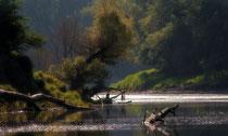 Nationalpark Donau-Auen Foto: Leitner