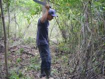 Travail de nettoyage dans la plantation