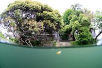 浮島神社 水中撮影
