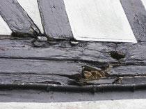 Hier ein Balken, der mit Consolan gestrichen war