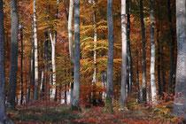 la forêt à l'automne