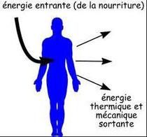 schéma de la circulation de l'énergie