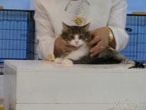 かわいい猫ちゃん発見!
