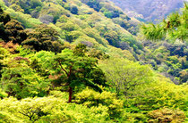 峡谷に聳え立つ フォトBy白鳥保美