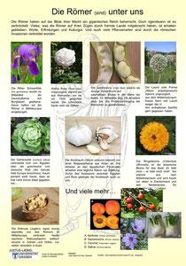 Beispielposter für eine Limes-Ausstellung