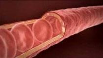 transfère de l'oxygène du vaisseau sanguin vers les cellules.