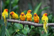 La peau de vos oiseaux peut ainsi se réparer, aidée par les différents éléments qui stimulent la croissance et le développement de nouvelles cellules cutanées saines, c'est ainsi qu'agit l'aloe vera!