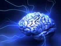 les omega  3 participent au Bon fonctionnement du cerveau, du coeur etc