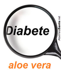 Le temps de guérison des plaies sous l'influence de l'Aloe Vera peut donc être réduit d'un tiers.