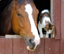 aloe vera sante et cheval, chien, chat, perruche, cochon (d'Inde), porcs, chèvre, mouton ou vache... et même pour les animaux de la basse-cour !