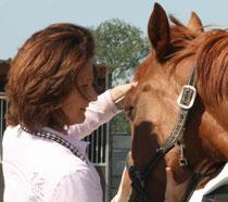 La suite très prochainement ;) avec un article pour les chevaux